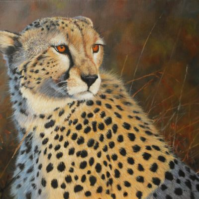 Maasai Cheetah 20 by 24ins 2016 The Frame Odiham Pip McGarry
