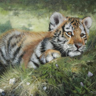 Curious Tiger Cub by Pip McGarry in The Frame Odiham.